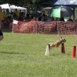 Kleiner Hund ganz groß - Uwe Zaunick und Basko beim HIndernislauf